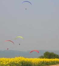 Colza et tapis volants sur Lalandelle
