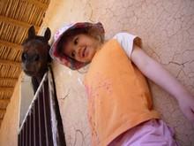 atlier cheval