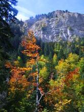 automne dans les aravis